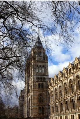 Koude winterbestemmingen Londen, reizen met zorg of begeleiding