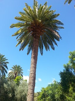 Gran Canaria. reizen met nederlands sprekende begeleiding