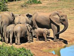 Zuidafrika,olifant, begeleide reizen